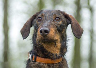 Hond Gijs